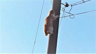 Весна пришла! Котики прилетели Коты верхолазы  Видео Про Котиков покорителей высот