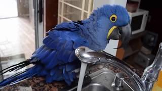 Funny Parrots Funniest And Cutest Parrots 2018