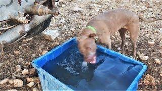 Приколы про собак в год собаки 2018 Смешные и милые собаки на видео Смотри и улыбайся! Funny dogs