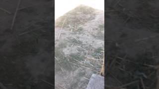 Рыбалка в Алматы пруд декабрьский 13 мая