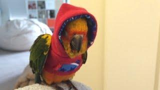 Funny Parrots   Funniest Parrot Videos 2018   YouTube