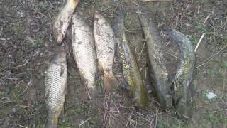 Рыбалка Низовье Каратала 2017