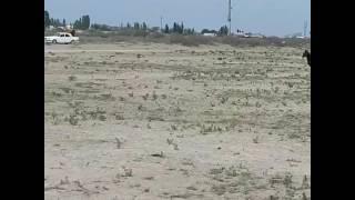 9 май созак ауданы жуантобе ауылындагы кокпар