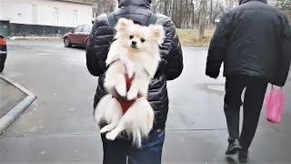 Приколы с Животными подборка SKIBIDI CHALLENGE Смешные собаки и другие животные