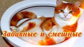 Смешные и забавные Кошки Собаки Для детей Позитив Создай себе хорошее настроение