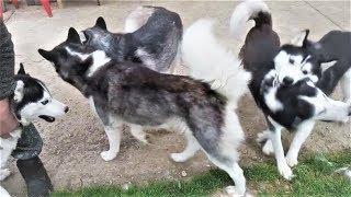 Смешные собаки 2017 Приколы с собаками и котами ТОПовая подборка видео Funny Dogs Compilation
