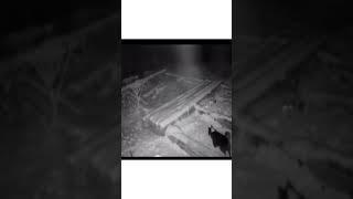 казахские волки загрызли собаку в боровом,щучинск,кокшетау , Казахстан