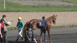 Скачка полукровных лошадей. Абаканский ипподром 2017  открытие