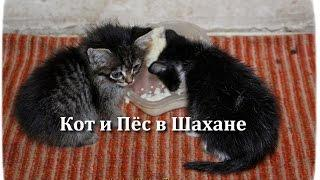 Кот и Пёс в Шахане