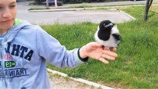 ПОПРОБУЙ НЕ ЗАСМЕЯТЬСЯ   лучшие смешные приколы и фейлы про птиц
