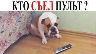 ПРИКОЛЫ С ЖИВОТНЫМИ Смешные Животные ТОПОВЫЕ ПРИКОЛЫ про ЖИВОТНЫХ Новые Русские Приколы СЕНТЯБРЬ