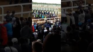 Ат жарыс 2017 Астана
